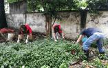 绿化工、破拆员、清洁工 百日攻坚三墩兰里社工全能出动