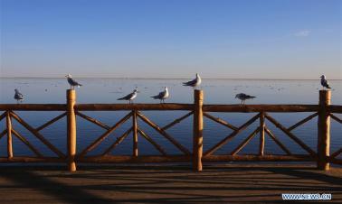 Scenery of Juyan Lake in N China's Inner Mongolia