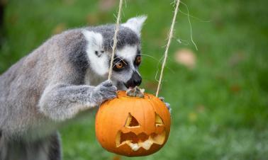 Animals celebrate upcoming Halloween