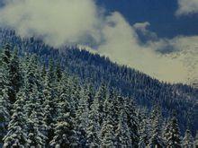 新疆天山天池原始森林