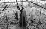 截至26日农业损失达7.91亿元 16支农业技术团队分赴各地指导救灾