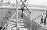 海塘养殖水产开始放量 进口冷冻海鲜价格实惠