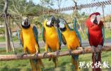 40只金刚鹦鹉乘机来南京 网友:有翅膀还坐飞机?