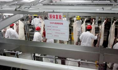 Pork processor shut down over outbreak