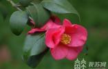 近万张照片 感受南师随园草木四季之美