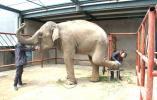 小象茜茜忙美甲 新生萌宠齐亮相 无锡动物园