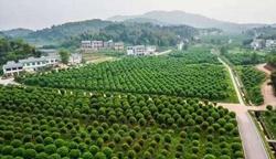 西部桂花博览园