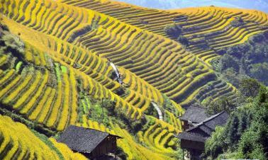 Scenery of terraced rice field of Longji in S China's Guangxi