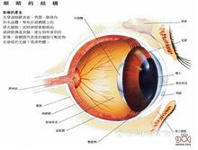 狗的眼睛结构