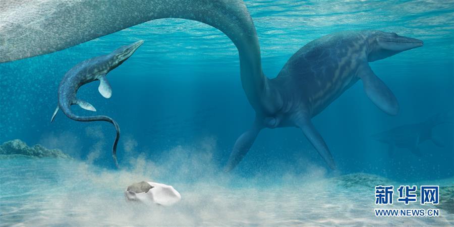 """科学家确认白垩纪""""海洋霸主""""沧龙的蛋化石"""
