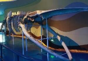 泉城海洋极地世界科普展厅