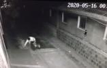 莱西:出门遛狗顺走邻居家的三角梅 结果被拘留10日