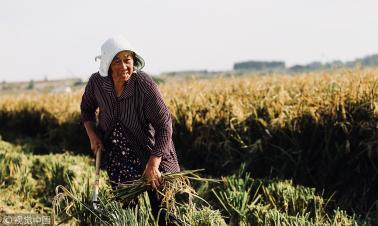 40 years on, Xiaogang still testbed of China's rural reform