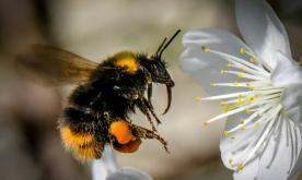 New pesticide may harm bees as much as those to be replaced