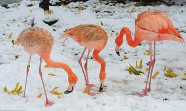 Hangzhou hit with first winter snow